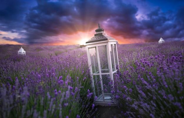 Lavender field, sunset or dawn. decorative flashlight in lavender flowers.