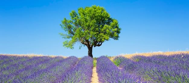 Лавандовые поля с деревом