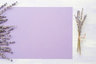 Lavender flower over the purple paper on backdrop