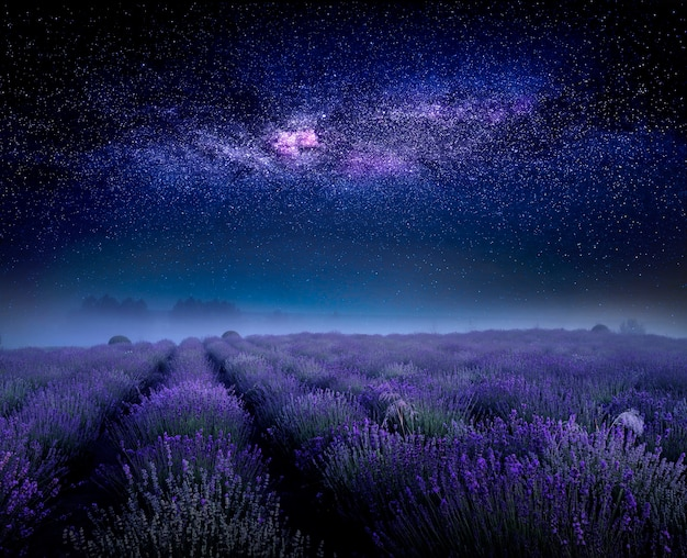 Lavender flowering field and starry sky with milky way, beautiful summer night landscape.