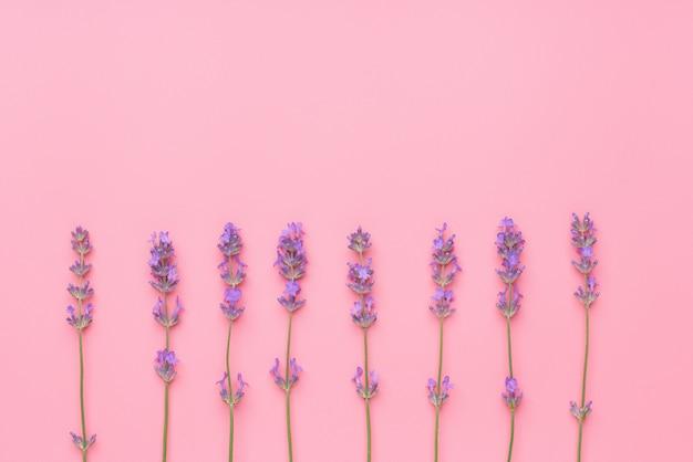 Лаванда цветы расположены на розовом столе. вид сверху, с копией пространства для текста.