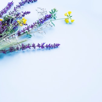 Lavender flowers on the blue background