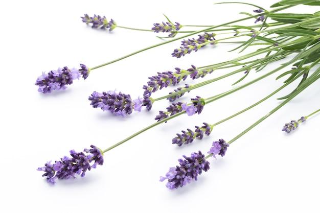 라벤더 꽃 무리 묶여 흰색 배경에 고립