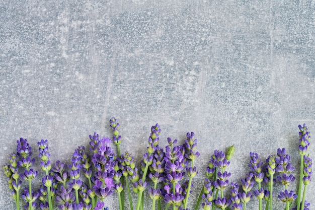 Lavender flowers on gray background. copyspace, top view