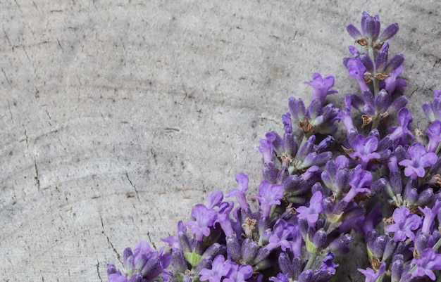 Lavender flowers on a gray background of an old stump