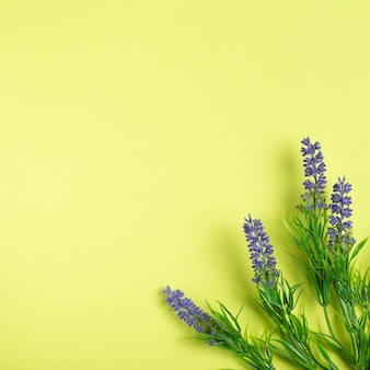 Lavender flowers on green background with copy space