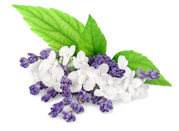 白い背景で隔離のラベンダーの花