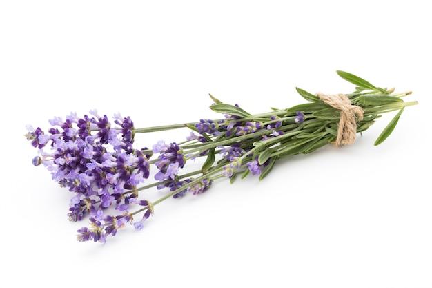 고립 된 라벤더 꽃