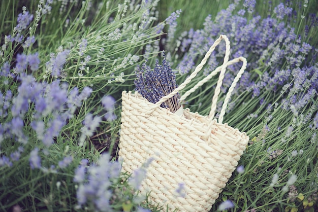Lavender flowers in lavender field.