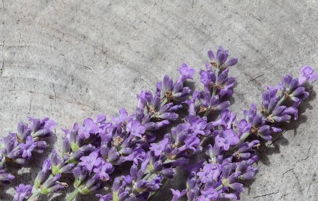 古い切り株の灰色の背景にラベンダーの花