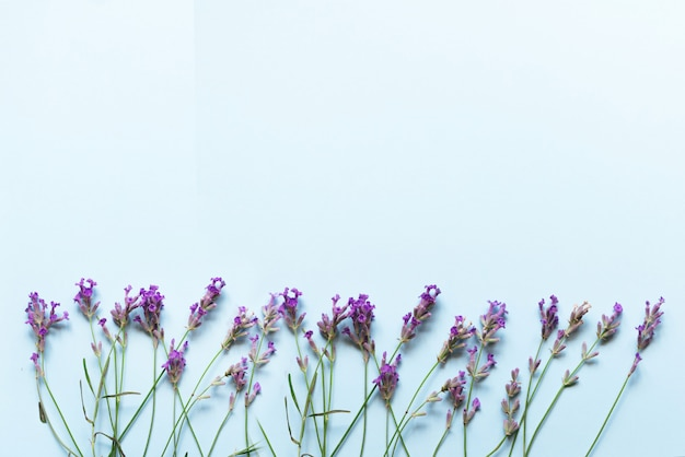 Lavender flowers on pastel blue background with top view and copy space.