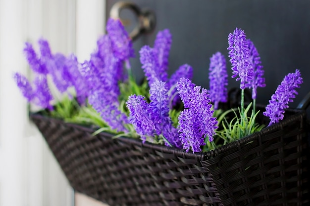 Lavender flowers in a pot on the streets of the city in hanging pots.