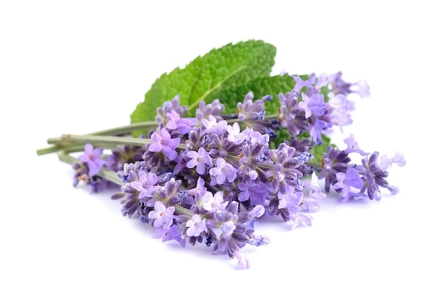 Lavender flowers with leaves isolated on white