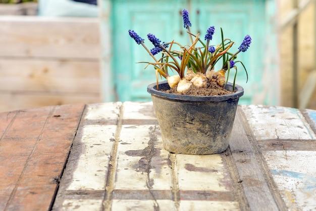 ビンテージテーブルの上に古い陶製の花瓶のラベンダー