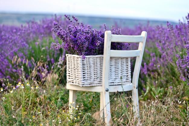Лаванда в корзине на стуле с лавандовым полем