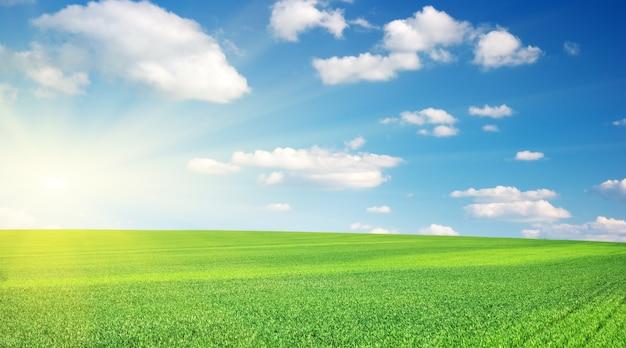 잔디와 흐린 하늘입니다.