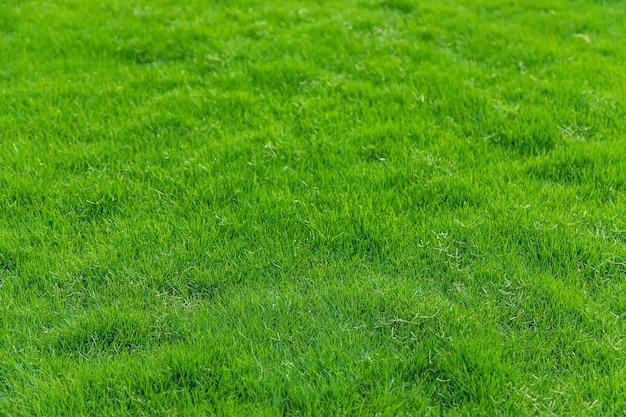 잔디 잔디 아름 다운 녹색 질감. 자연.