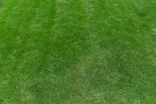 잔디 잔디 아름 다운 녹색 텍스처