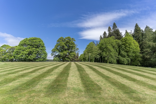 The lawn has been mown in the garden , scotland