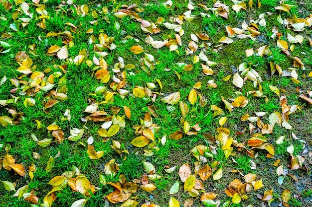 芝生の季節の国美しい色の平野