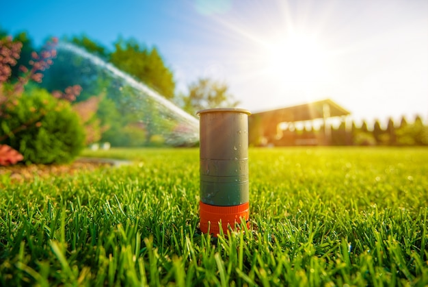 Lawn sprinkler in action