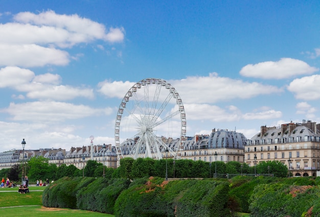 Lawn of tuileries garden with ferry wheel at summer day, paris, france