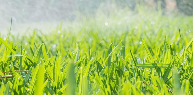 庭の芝生の緑の新鮮な草の上に水を噴霧する芝生水スプリンクラー