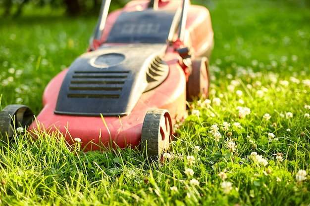 잔디 깎는 기계는 가정 정원에서 잔디를 깎고, 작업, 햇빛, 모든 목적을 위한 훌륭한 디자인, 원예 개념