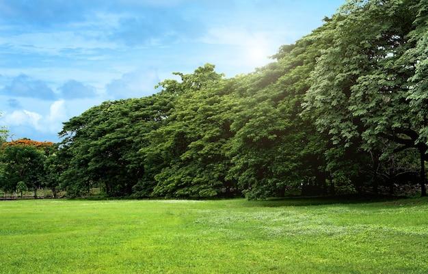 Газоны и зеленые деревья в парке в ясный день в центре бангкока.