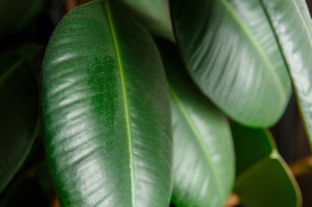 Layer of dust and dirt on a leaf of a plant