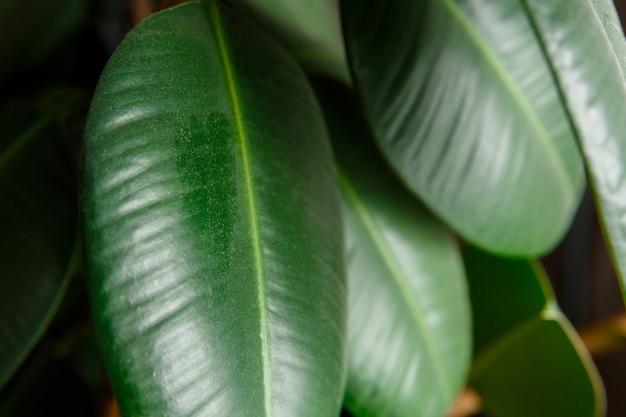 식물의 잎에 먼지와 흙의 층