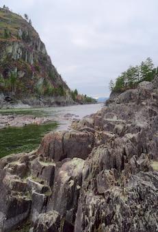 알타이 산맥의 강둑에 겹겹이 쌓인 날카로운 바위 바위에 소나무 꽃이 만발한 maralnik