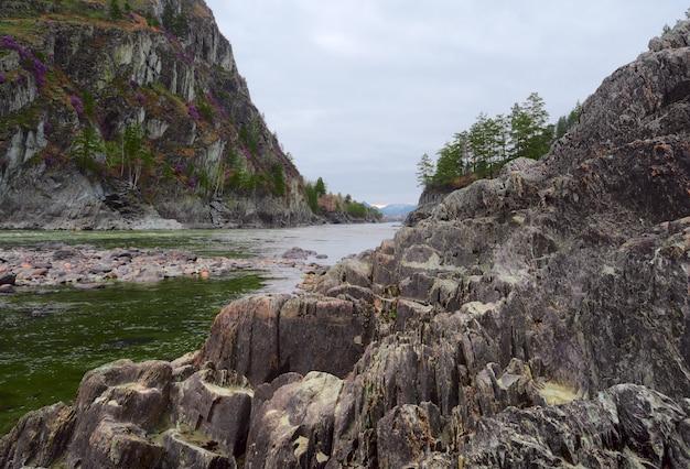 Слоистые острые скалы на берегу реки в горном алтае цветущие сосны маральник