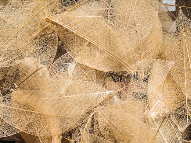 レイヤード透明な葉の壁紙の背景