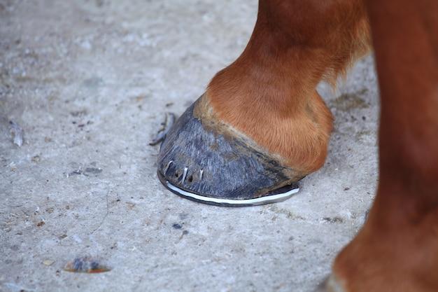 Laying a horseshoe