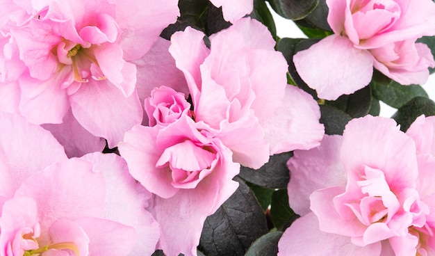 Layout of beautiful pink pastel spring flowers. celebration concept. macro and close up photo