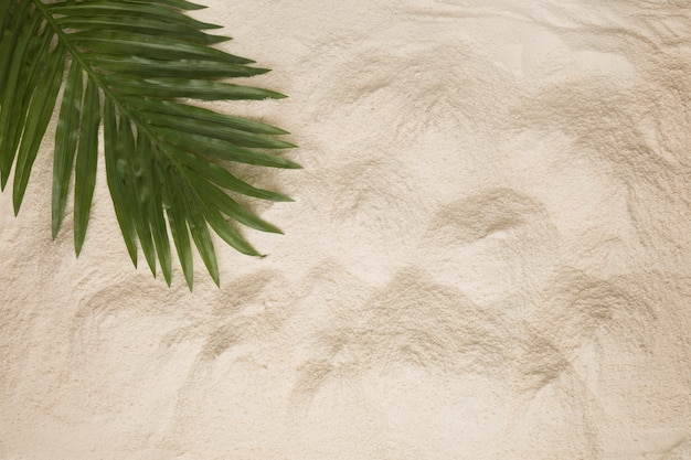 Layout of dusty palm tree leaf on sand