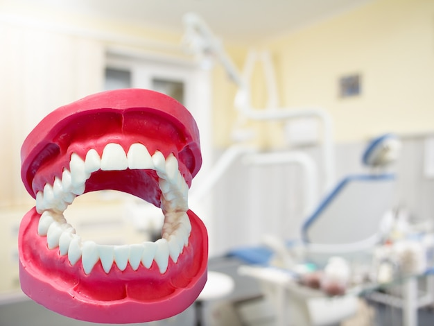 Layout of the human jaw and a dental clinic on the blurred background.