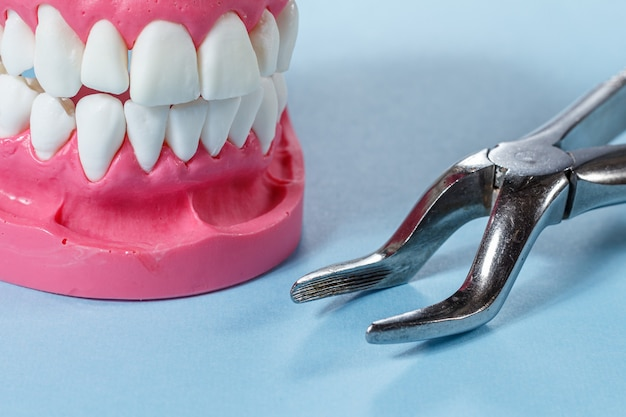 Layout of the human jaw and a stainless steel dental tongs on the blue background.