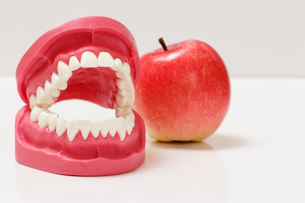 Layout of the human jaw with an apple on the white background.