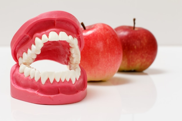 Layout of the human jaw with red apples on the white background.