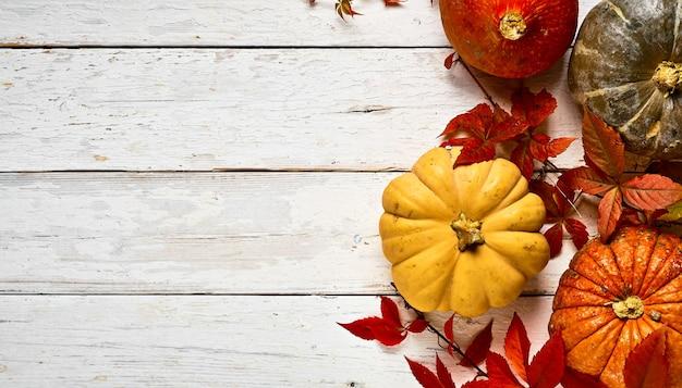 Макет красочных тыкв на белой деревянной старой доске, украшенной листьями ивы, вид сверху с копией пространства