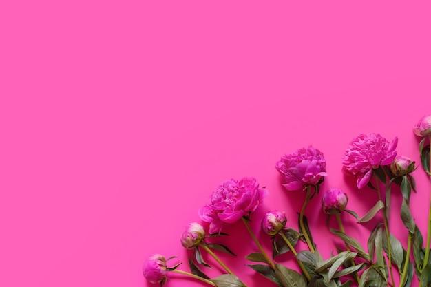 분홍색 배경 복사 공간에 분홍색 꽃 모란의 레이아웃