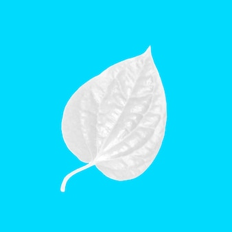 Layout of white leaves on pastel blue background. minimal idea concept. Flat lay.