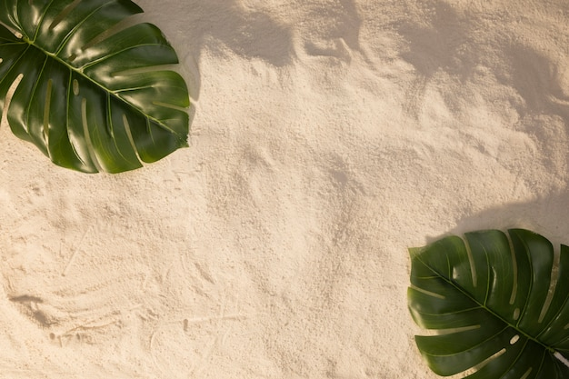 Layout of plant green leaves on sand