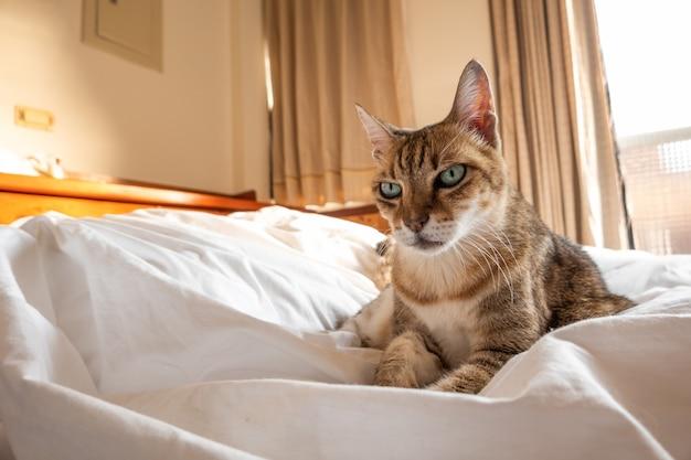 Ленивый и забавный полосатый кот спит на кровати дома