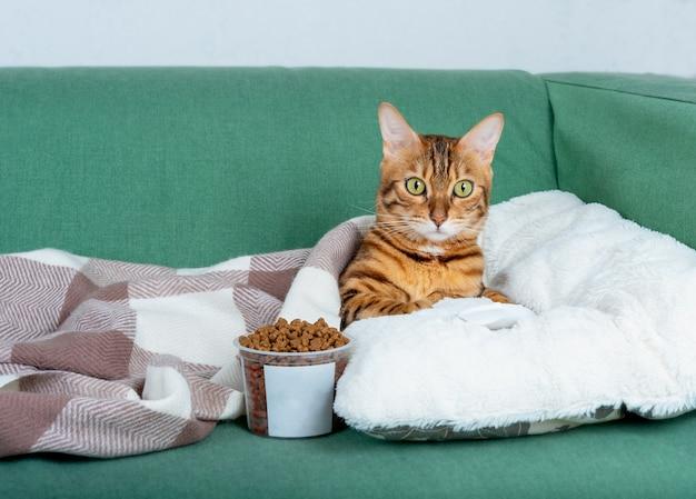 Ленивый бенгальский кот лежит на диване с пультом от телевизора и сухим кормом