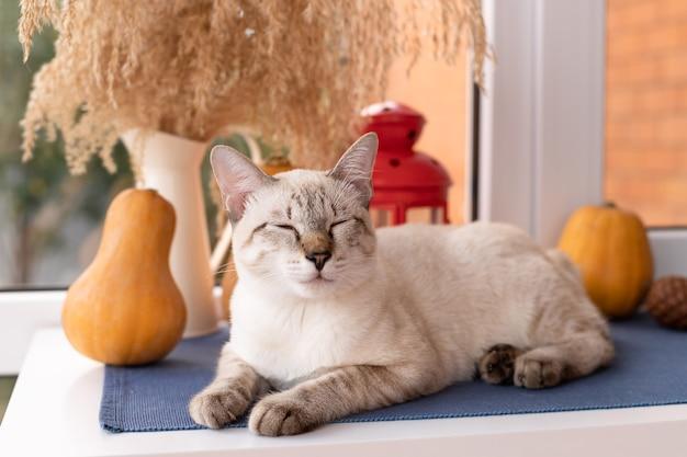 Lazy cat sleeping on windowsill with autumn decorations cozy autumn scene with pumpkins