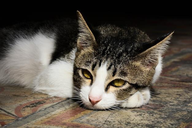 게으른 고양이