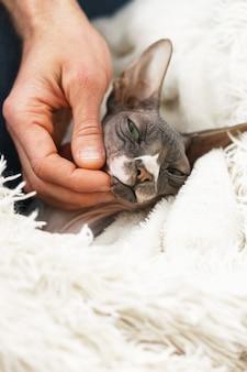 怠惰なかわいい猫は家で毛布の下に横たわっています